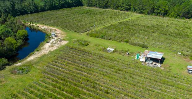 Organic Highbush Blueberry Farm image