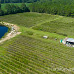 Organic Highbush Blueberry Farm thumbnail image