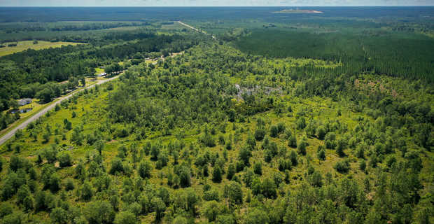 25 Acres Full of Possibility in Screven, GA image