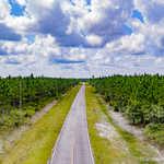 Suwannee Timberland Tract thumbnail image