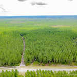 Slash Pine Investment thumbnail image