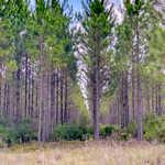 Perfect Hunter's Getaway thumbnail image