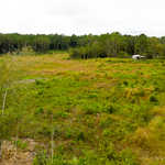 Investment Opportunity 55 Acres  image
