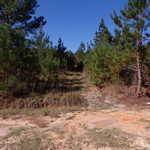 8 Acre Altamaha River Homesite thumbnail image