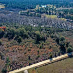 Ed Harrell Road 19.88 Acres thumbnail image