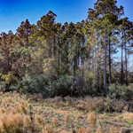 4493 Altamaha School Rd 126 Acres thumbnail image
