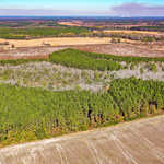 4493 Altamaha School Rd Tract 1 55 Acres thumbnail image