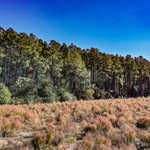 Tract 2 66 Acres Great Farm and Hunting Land thumbnail image