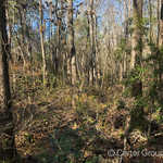 Great Investment Tract 1 60 Acres thumbnail image