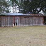 10 Acre Mini Farm Near the Altamaha River thumbnail image