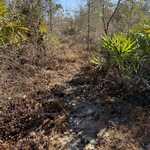 200+/- Acres of Hunters Paradise thumbnail image