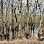 55 Acres Hwy 144 thumbnail image
