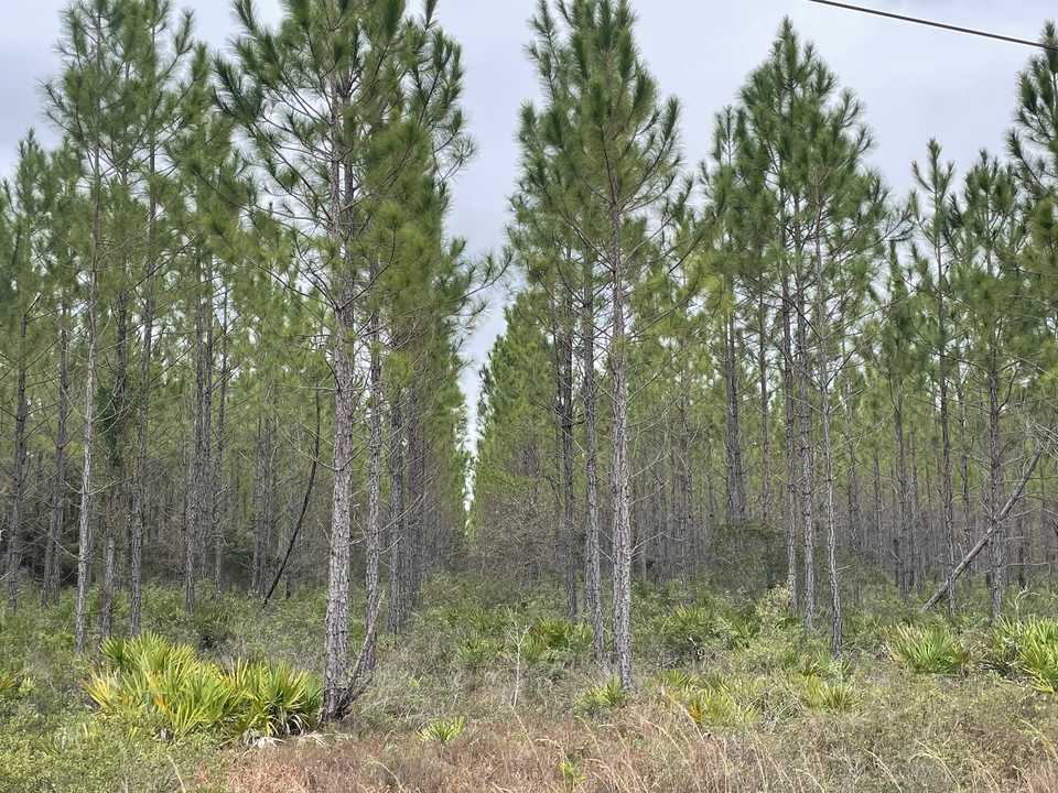 Tract 1- 25 Acres on Suwannee Chapel Rd main image