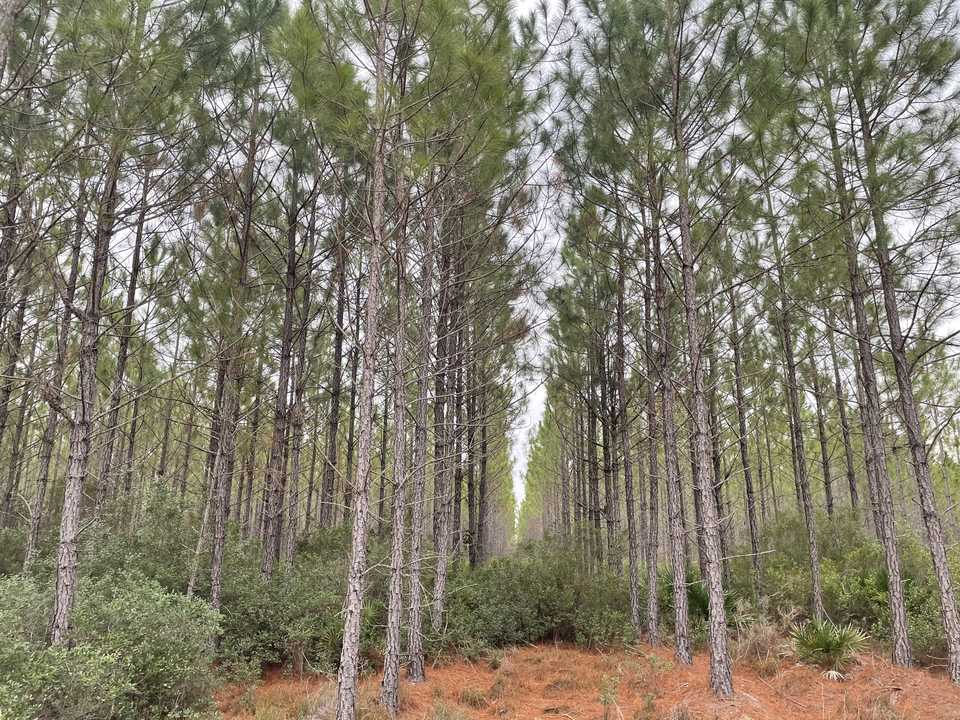 Tract 3- 25 Acres on Suwannee Chapel Rd main image