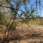 0 Bonham Rd thumbnail image