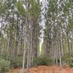 11 acres on Whispering Pines Rd thumbnail image