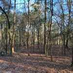 Moss Landing - Lot 21 thumbnail image