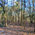 Moss Landing - Lot 59 thumbnail image