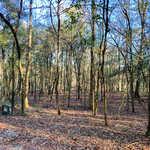 Moss Landing - Lot 55 thumbnail image