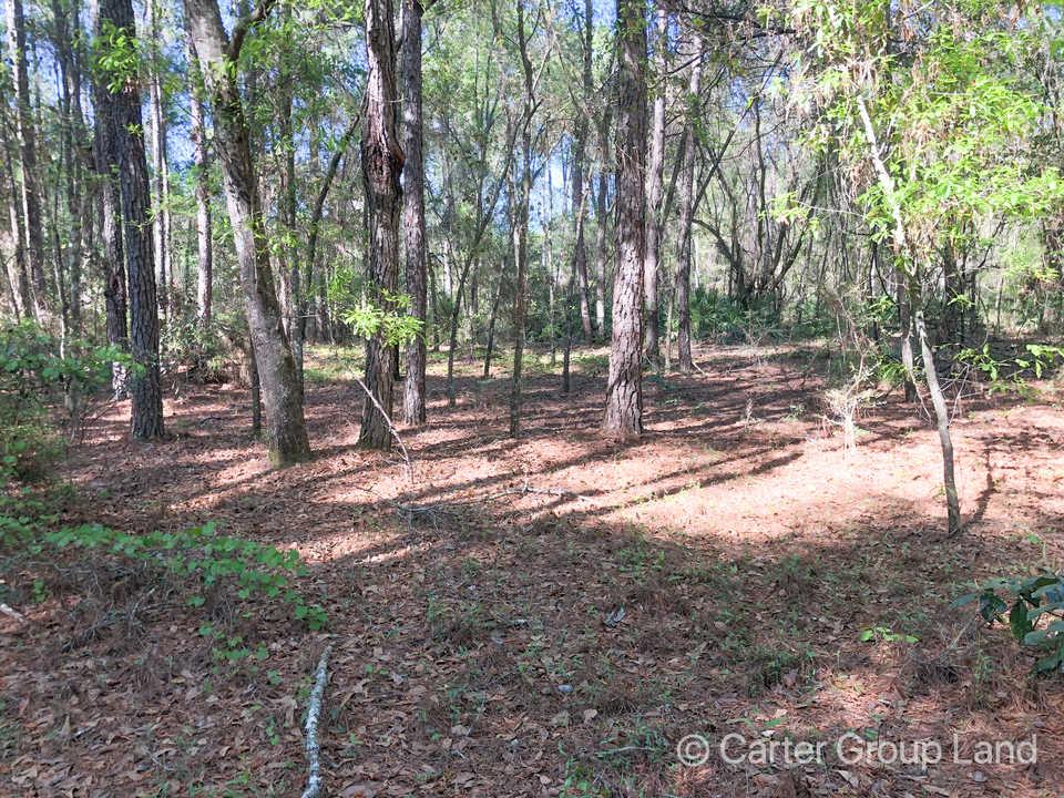 Goose Creek Homestead main image