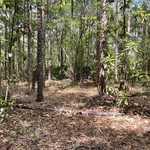 Lot 2 Placid Acres Subdivision thumbnail image