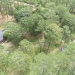 4570 Walter Griffis Road Odum thumbnail image