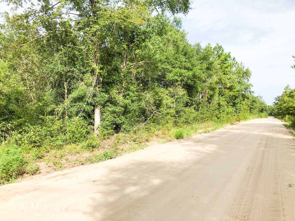 8 Lots in Linden Acres Subdivision main image