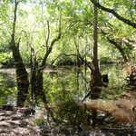 667 Sandy Run Rd image