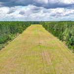 Timber Tract with Grass Landing Strip in Screven, GA image