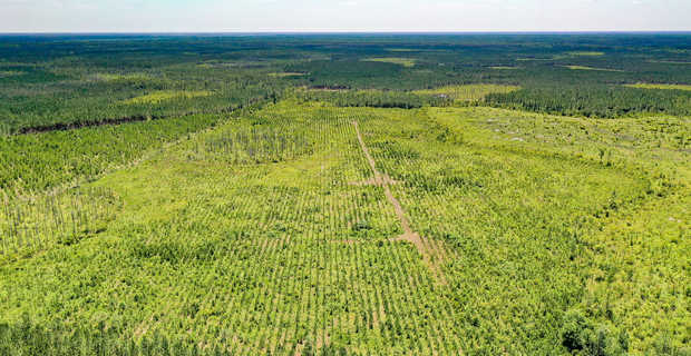 99 Acre Ware County Deal! image