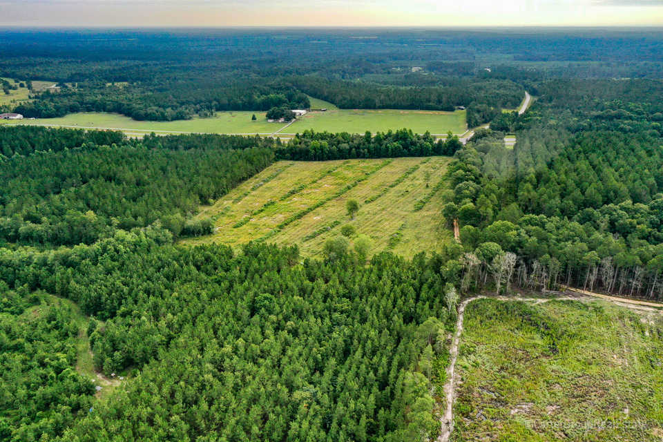 127 Acre Hunting and Timber Investment main image