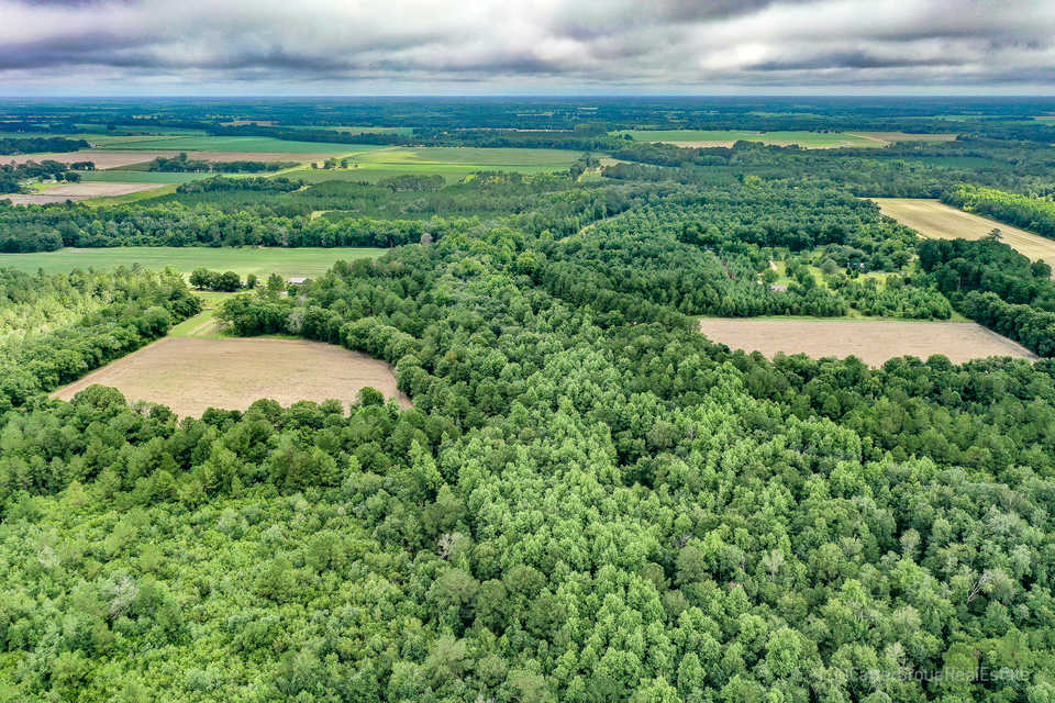 290 Acre Little Satilla Creek Plantation!  main image