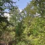 18+ Acres on Bay Acres Rd thumbnail image