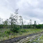 3 Acre Ware County Homesite thumbnail image