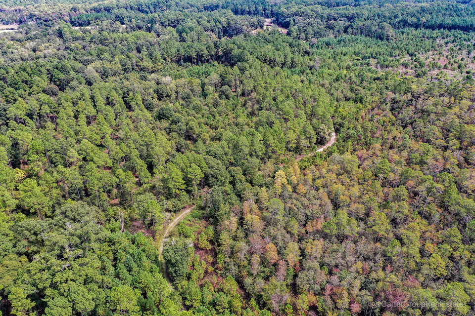 404 Acre Okefenokee Hunting Reserve main image