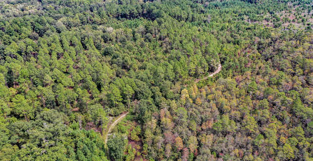 Location, Wildlife, Recreational Tract Bordering Okefenokee State Forest image