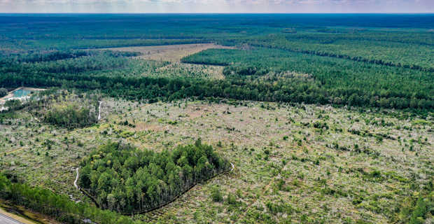 Lake and Wildlife Create Exceptional Hunting Near Okefenokee State Forest image
